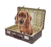 Bassottino in valigia