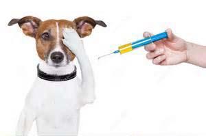 cane pauroso e vaccino